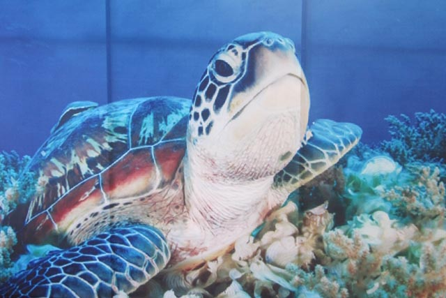 Action plans for marine turtle conservation